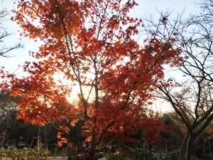 紅葉の写真です。
